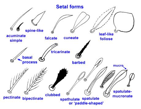setal_forms